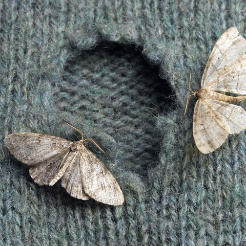 moth eaten wool sweater